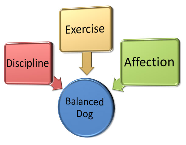 American K9 | Balanced Dog Image
