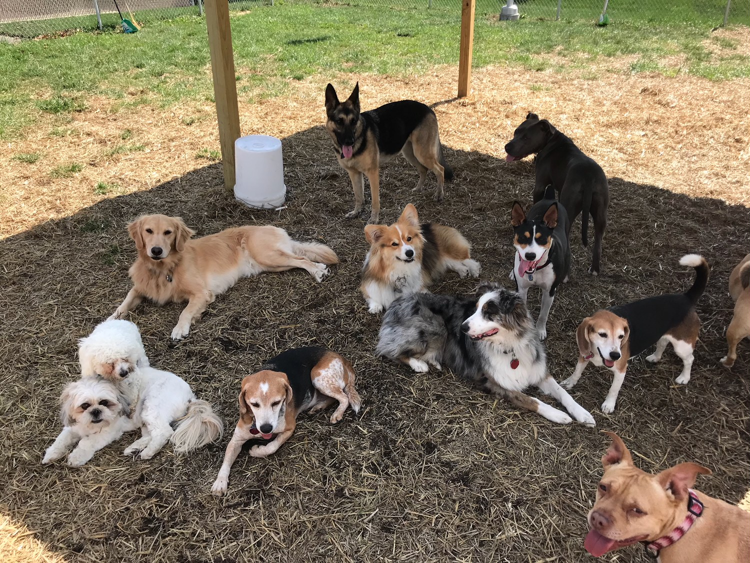 Doggie DayCare Middletown Delaware